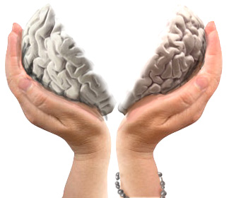 brain-split